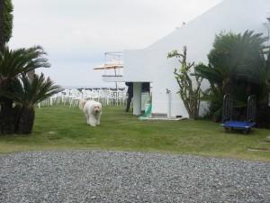 ②    お庭から出迎えてくれたのは北原先生の愛犬ロビーくん!とてもよいこ。